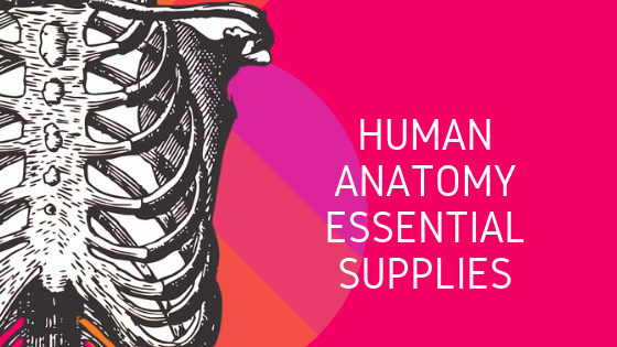 Human Anatomy Essentials